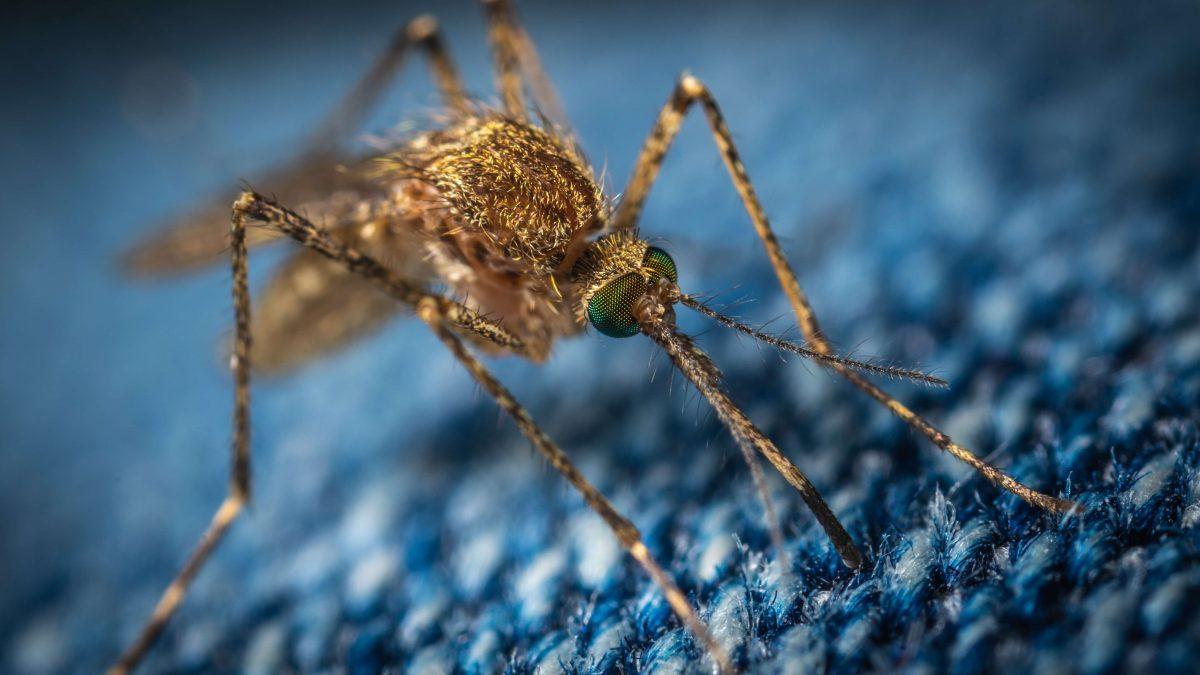 W jaki sposób pozbyć się komarów