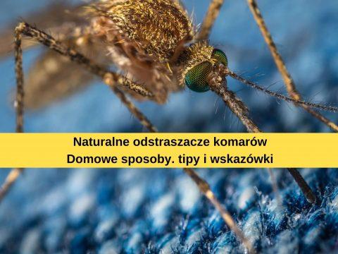 Komary jak je zwalczać naturalnie?