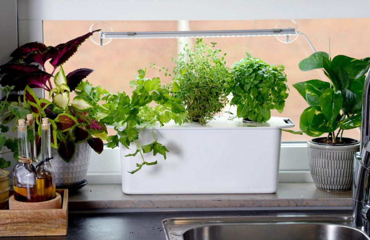 Hydroponika nelson garden