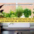 Hydroponika – sposób na świeże zioła przez cały rok